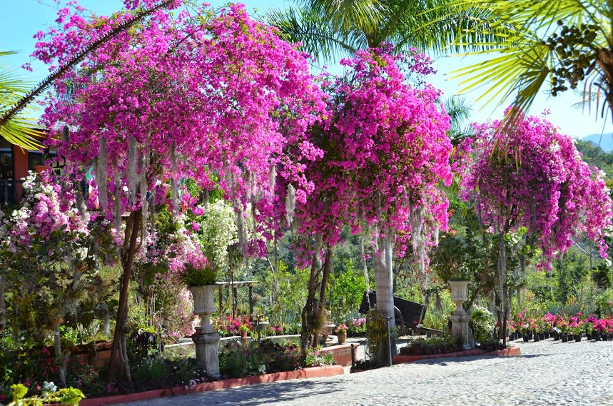 Enjoy The Puerto Vallarta Botanical Gardens Realtor